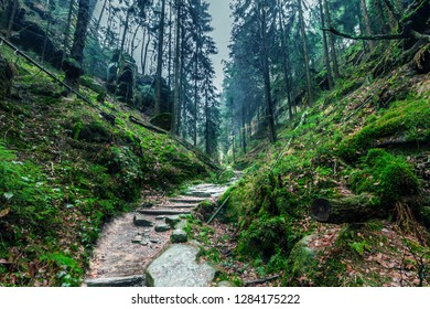 A footpath in a green forest in Bastei,  Saxony, Germany. Beautiful trail through pine trees. Path leading among the trees and stones in rainy day. Stones overgrown with lush moss. Hidden mystic path.