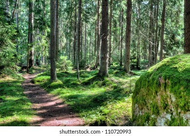 A footpath in a green magical forest landscape in the summer, in Finland Scandinavia