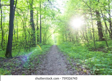 footpath in green spring forest. ecology concept