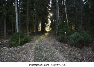 Footpath into a coniferous forest with a sunlit glade at the end