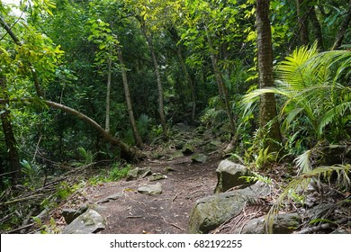 Footpath in the jungle on the north of Huahine Nui island, Maeva, French Polynesia, south Pacific, Oceania