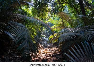 Imágenes, fotos de stock y vectores sobre Jungle Scene
