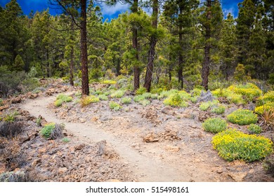 "footpath in the mountain forest in ""Paisaje Lunar"" route, Tenerife, Spain"