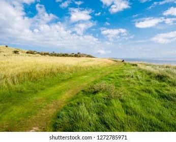 Footpath in nature reserve Het Oerd at Wadden Sea coast of West Frisian island Ameland, Friesland, Netherlands