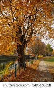 Footpath on the riverbank in autumn