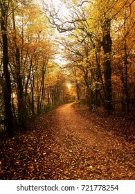 Footpath passing through autumn trees in the forest