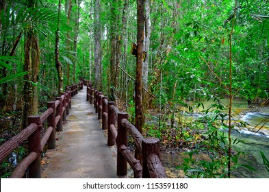 Footpath to Sa Morakot in the Khao Nor Chuchi forest