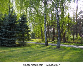 Footpath in spring forest, many trees