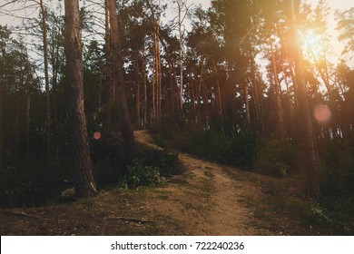 Footpath in summer forest at sunrise