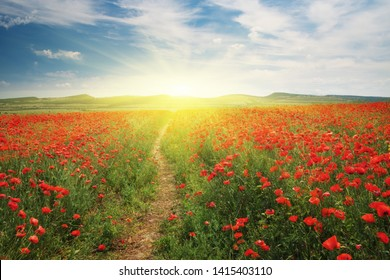 Footpath to sun and meadow of poppies. Spring nature landscape.