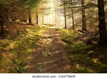 A footpath in the Tay Forest, Perthshire, Scotland.