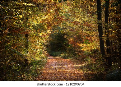 footpath through an autumn forest with colorful foliage, copy space, selected focus