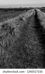 A footpath through the fields along the Ore Estuary, Suffolk, UK.