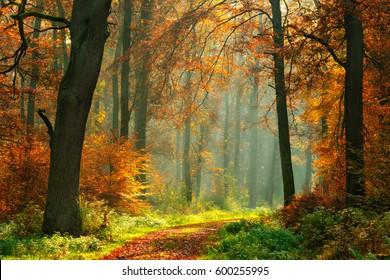 Wanderweg durch den Foggy Forest im Herbst, beleuchtet von Libams