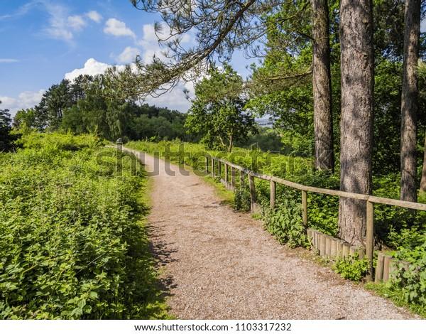 footpath through forest
