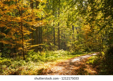 Footpath through a forest in autumn