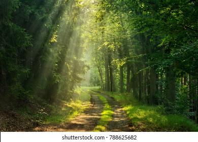 Fußweg durch Forestilluminiert von Sunbeams durch Nebel