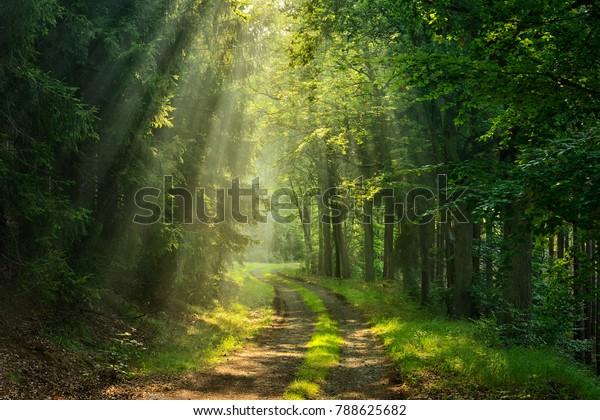 Footpath through Forestilluminated by Sunbeams through Fog