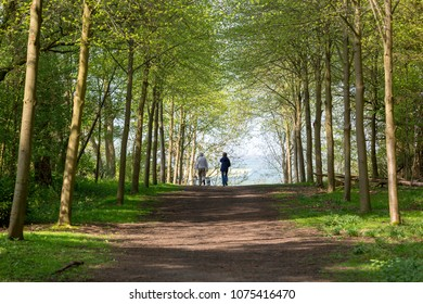 Footpath through Green Forest of Beech Trees in Spring with two people walking dogs in the distance
