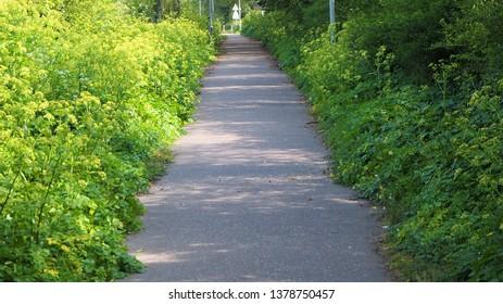 Footpath through the green wood.