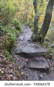 Footpath through Hebden Dale woods, West Yorkshire, in autumn
