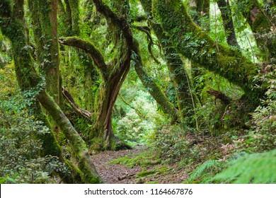 footpath through the rainforest near Mount Tatanaki, New Zealand, North Island