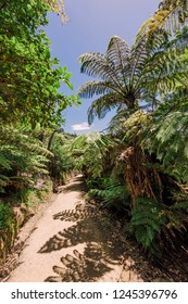 Footpath through tree ferns to Cathedral Cove - Coromandel Peninsula, North Island, New Zealand