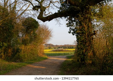 Footpath through trees to a distant view of rape fields in Oakley Hampshire