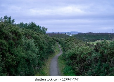 A footpath trail leads through gorse bush thicket towards hills in distance