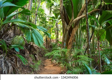 Footpath in tropical rainforest. The Vallee De Mai palm forest ( May Valley),  island of Praslin, Seychelles.