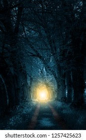 footpath trough mystically forest to sunlight