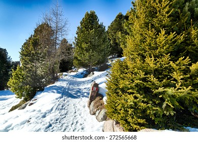 Footpath in white snow in a forest of green pines and firs on Dolomites mountains