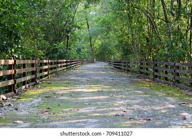 Footpath without any pedestrians in a mangrove forest, with fallen leaves on the ground