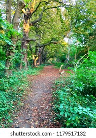 Footpath in a wooded forest during sunset in autumn, disappears off into the horizon with green bushes on either side. Mitcham, England