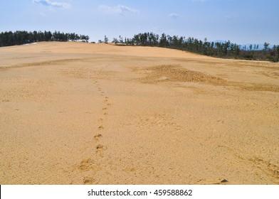 Footprint of the desert