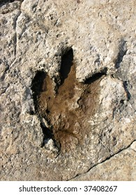 Footprint of a dinosaur with three toes