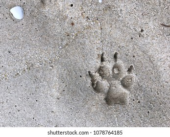 Footprint of a dog on wet sand beach with copy space text.