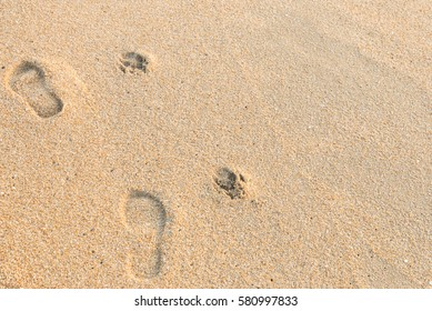 the footprint of human and dog on the sand beach