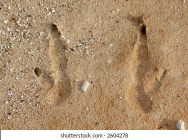 Footprint of a little kangaroo; detailed, can see the texture of the foot pads.