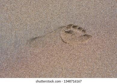 Footprint on the dark brown sand.