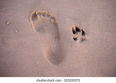 Footprint of person and dog on the beach, playing on the beach with the pet