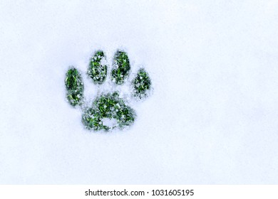 footprint in the snow in the form of a cat's paw with green grass, a creative concept of the struggle of the seasons, spring and winter