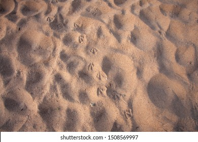 Footprints of a bird in the sand. A bird walked along the beach. Photo background with copy space