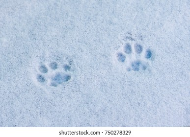 footprints cat in the snow