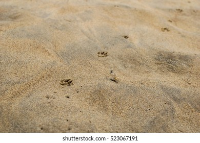 Footprints of the dog on the sand