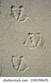 footprints of a duck in the sand on the beach