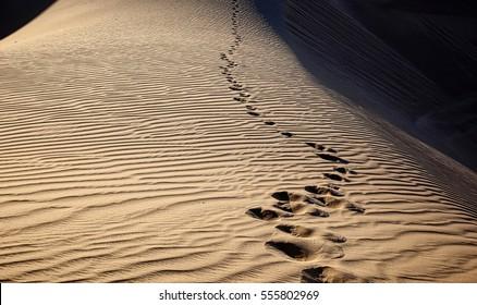 Footprints at dusk at the Imperial Sand Dunes near Yuma, Arizona