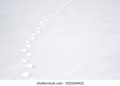 footprints of my steps in the mountains