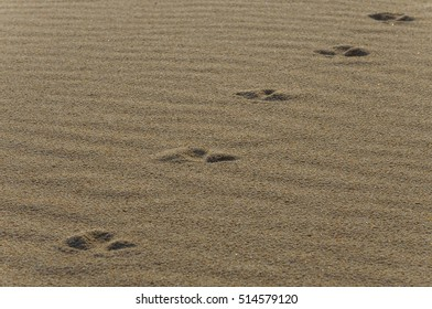 Footprints on the golden sand