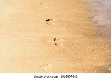 Footprints on sandy beach